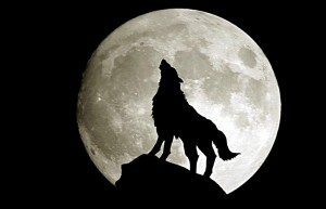 Wolf-Moon-fantasy-28637592-1920-1200